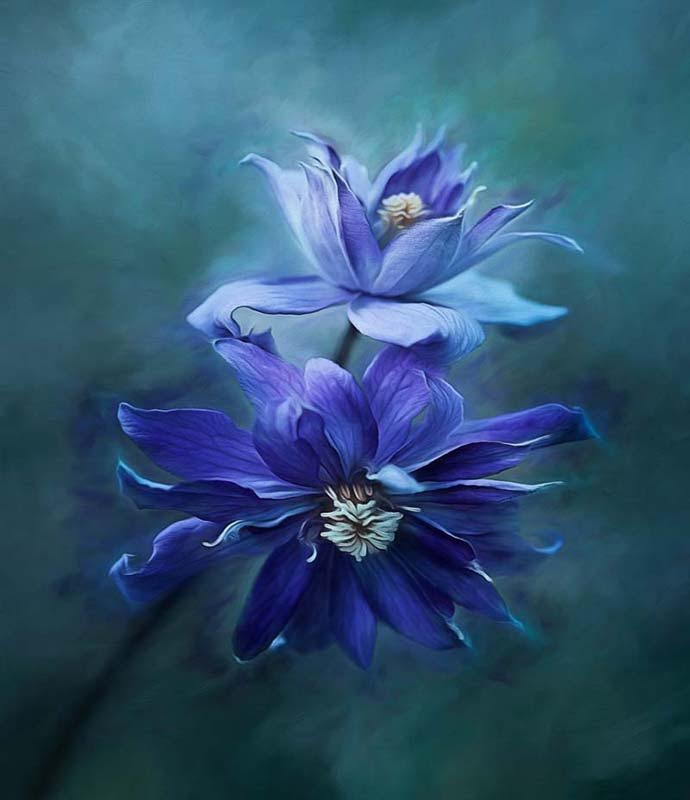 clint-hudson-blue-flower